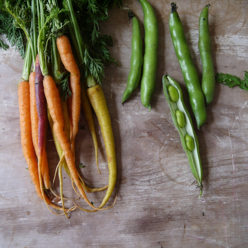 Heritage carrots and broad beans